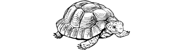 Sussex Chelonian Society